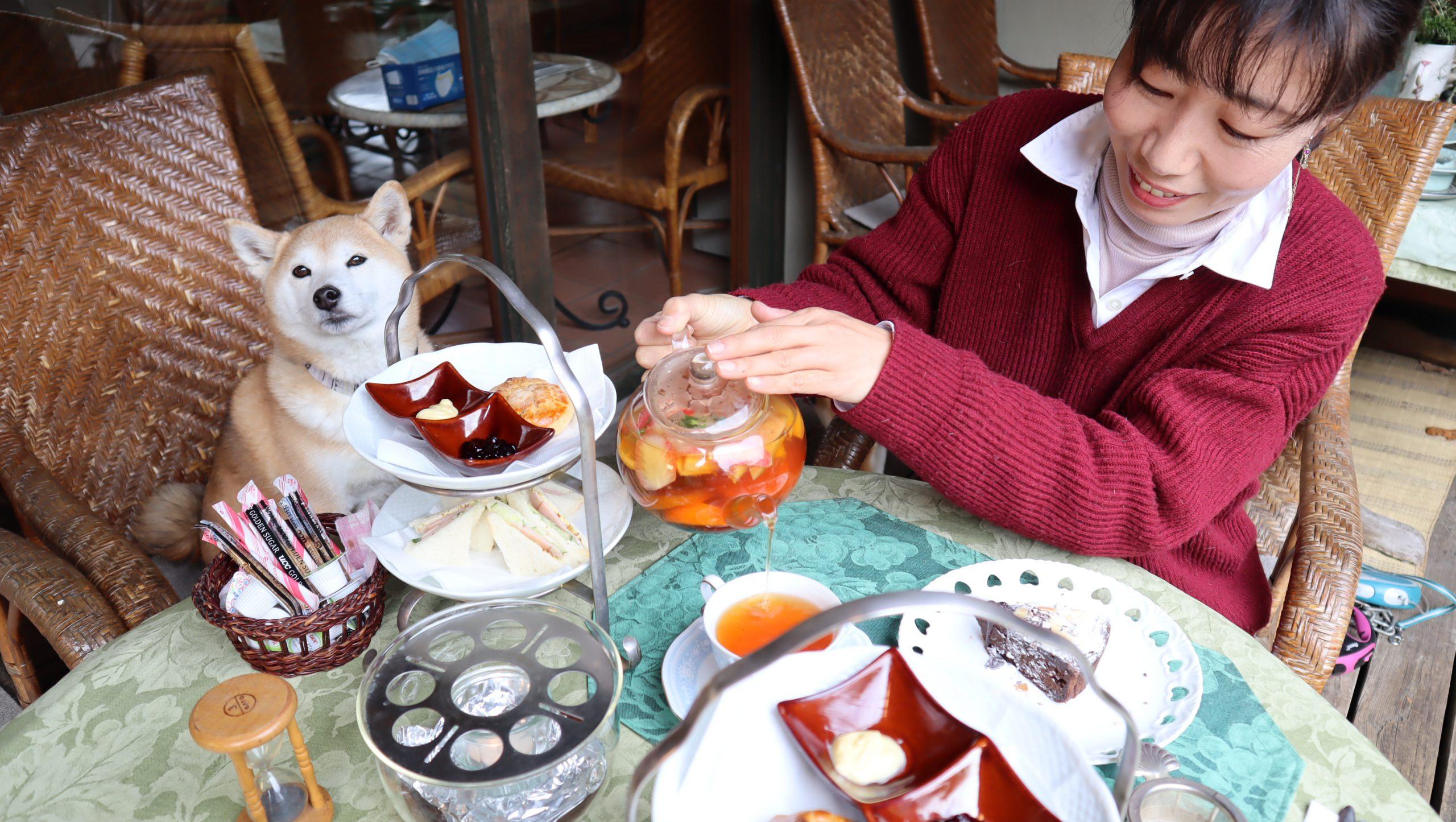 花と紅茶 Pixy